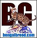Bengal Breed